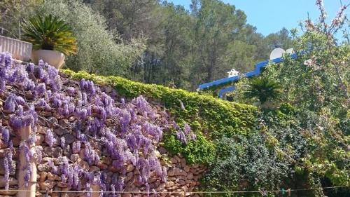Jardin Mareseta DSC_0617